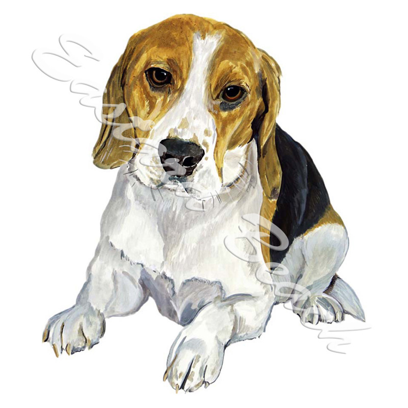Beagle - Printed Vinyl Decal