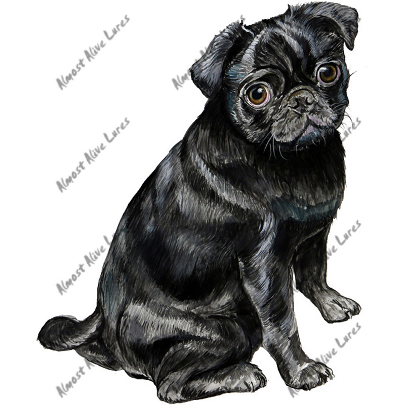 Black Pug - Printed Vinyl Decal