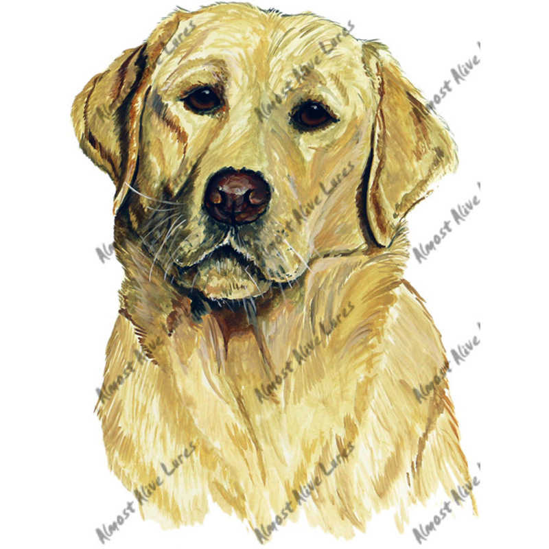 Yellow Golden Labrador Retriever - Printed Vinyl Decal