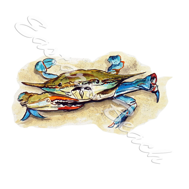 Blue Crab in Sand - Printed Vinyl Decal