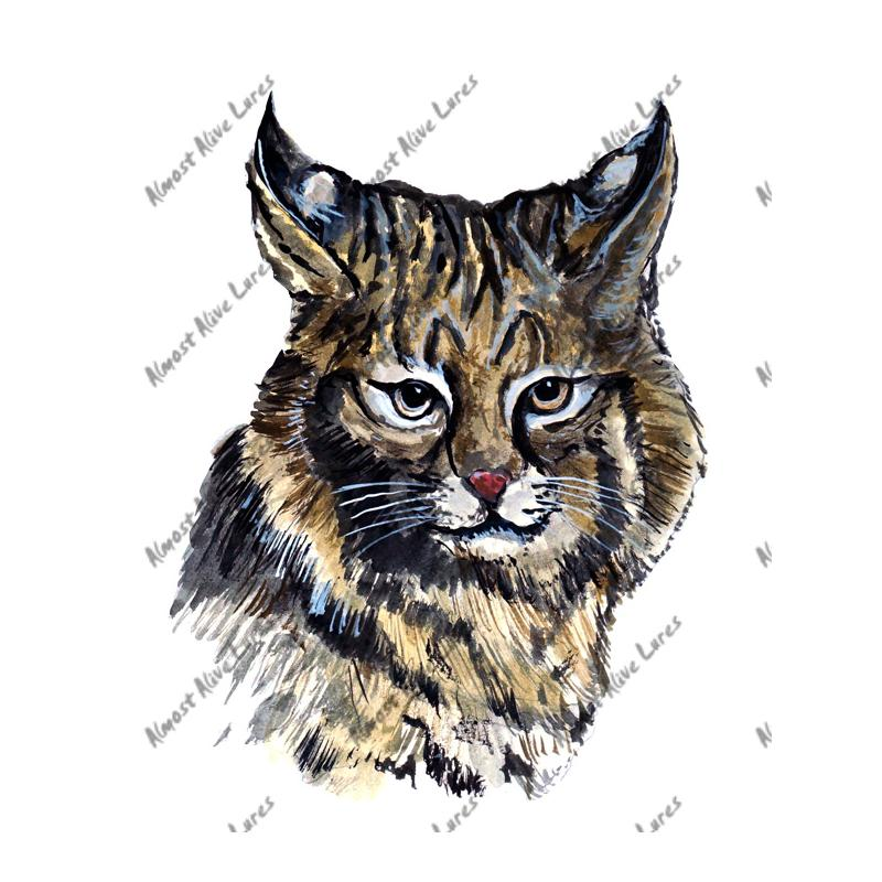 Bobcat - Printed Vinyl Decal