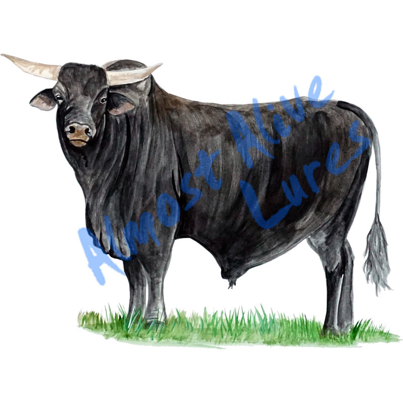 Brangus Bull - Printed Vinyl Decal