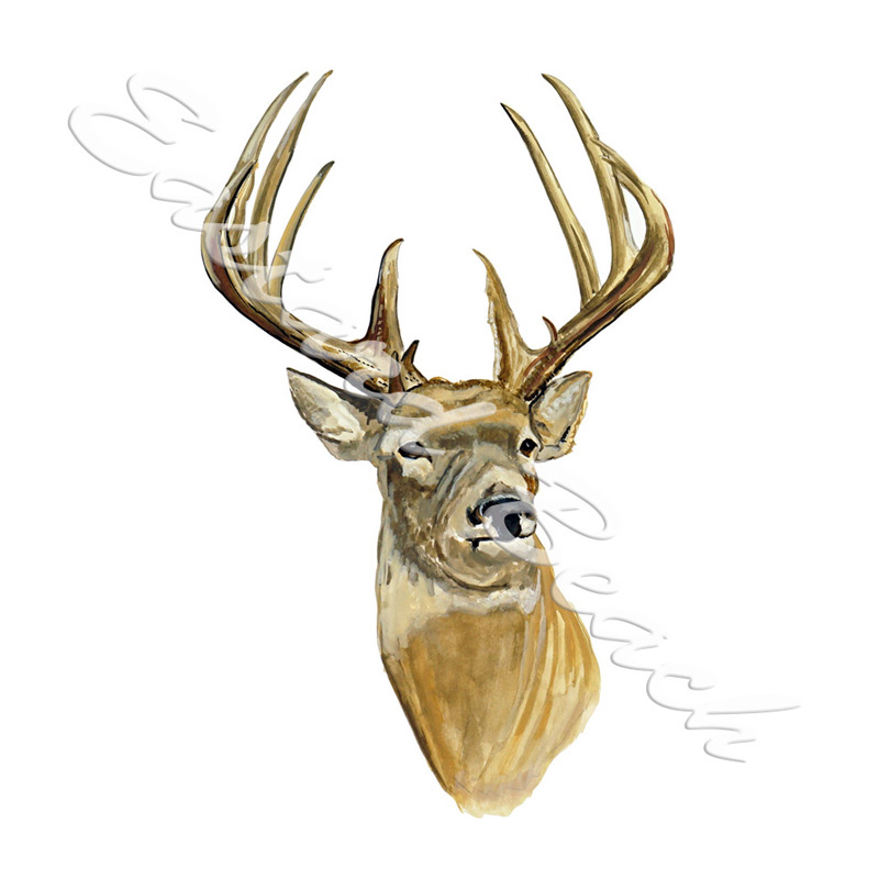 Buck Deer Head - 3.614 x 5.662 Inches - Printed Vinyl Decal