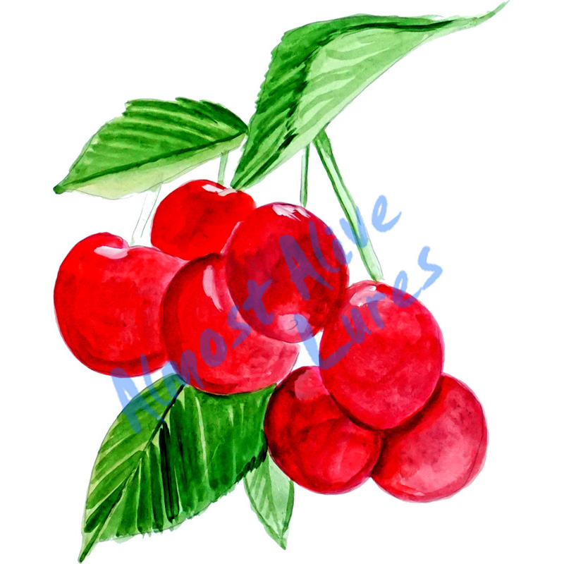 Cherries - Printed Vinyl Decal
