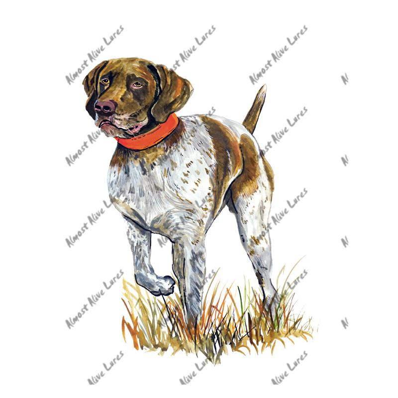 German Short Haired Pointer - Printed Vinyl Decal