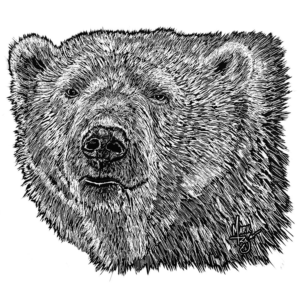 Grizzly Bear - Pen & Ink