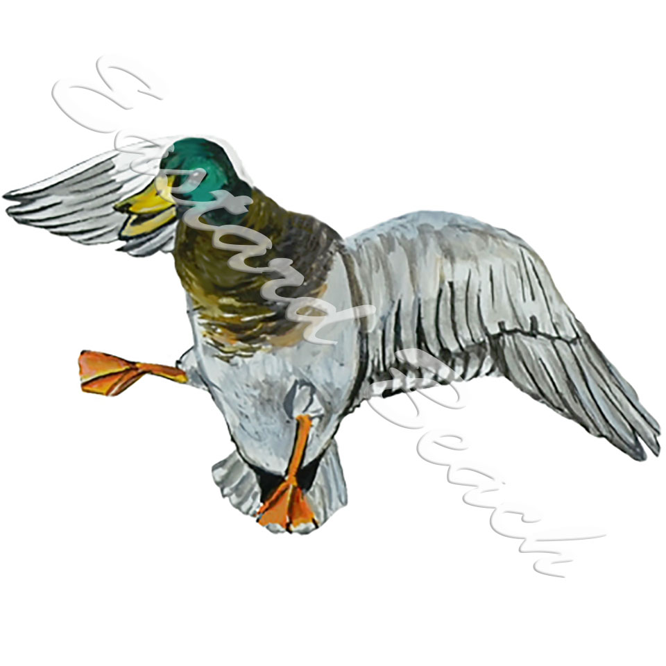 Mallard In Flight - Printed Vinyl Decal
