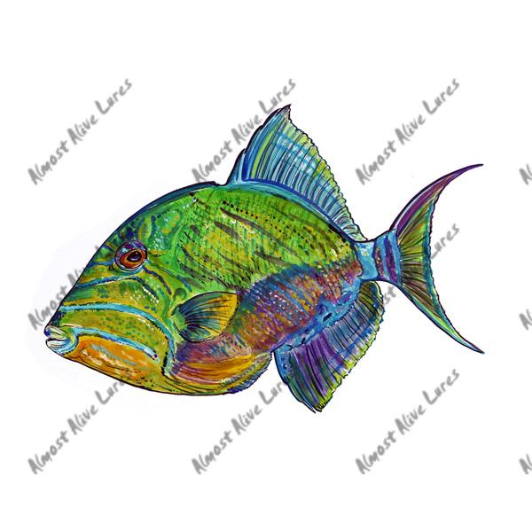 Queen Triggerfish - Printed Vinyl Decal