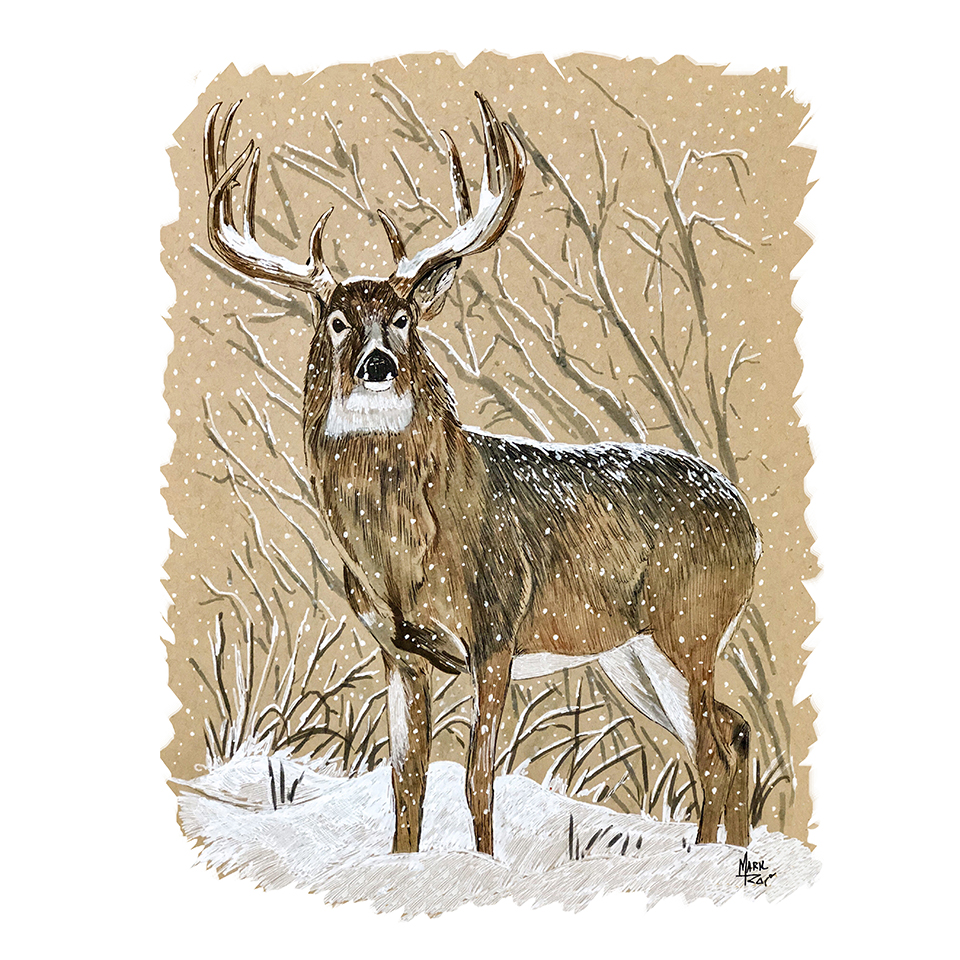 White Tail Deer in Snow