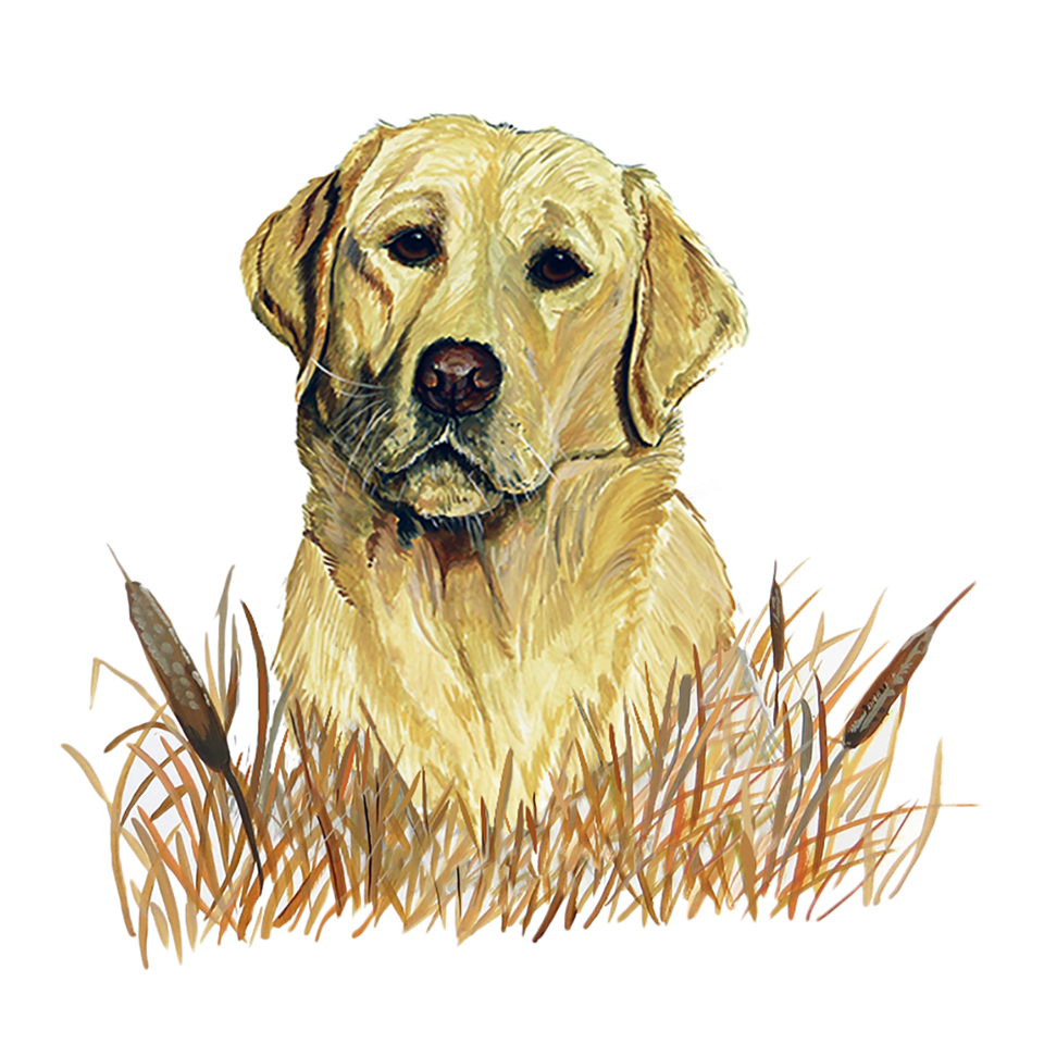 Yellow Lab in Grass